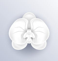 Cutout flower - beautiful orchid paper craft vector image
