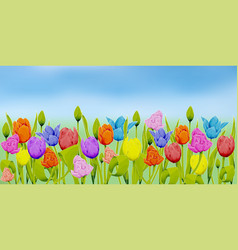 many multicolored tulips against the background vector image