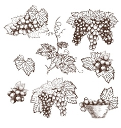 Set of Bunch grapes sketch style vector image
