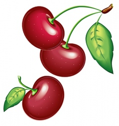 09 cherry vector image