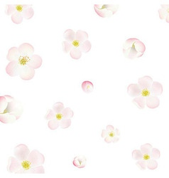 Apple Tree Flowers Background vector image