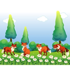 Four foxes in flower field vector