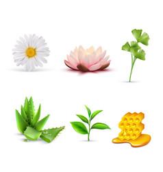 Organic cosmetic ingredients set vector