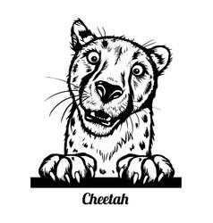 peeking cheetah - funny cheetah out - face vector image