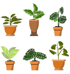 potted plants isolated on white set six green vector image