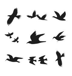 silhouette black fly flock of birds vector image