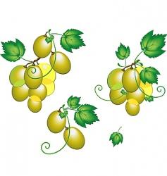 grape vector image vector image