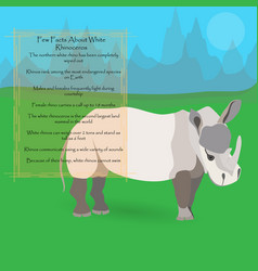 african white rhinoceros vector image