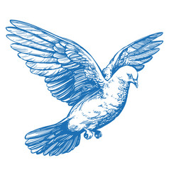 dove bird is a symbol peace and purity hand vector image
