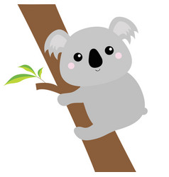 Koala face head hanging on eucalyptus tree gray vector