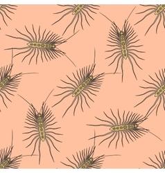 Seamless pattern with Scutigera coleoptrata vector image vector image