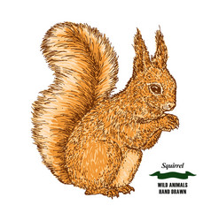 forest animal squirrel hand drawn colored sketch vector image vector image