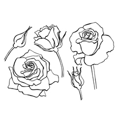 set of hand-draw line rose collection vector image