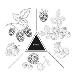 a set of berries blueberries cherries raspberries vector image