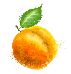 Apricot logo design template peach vector