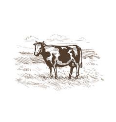 Cow grazing in the meadow milk beef logo or vector