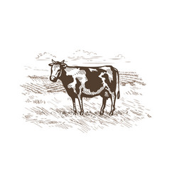 Cow grazing in the meadow milk beef logo vector