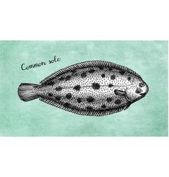Ink sketch common sole vector