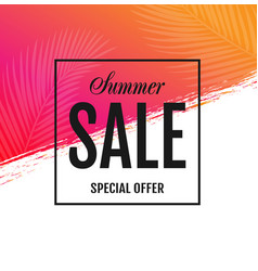 summer sale special offer poster vector image