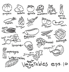set of vegetables doodles vector image vector image