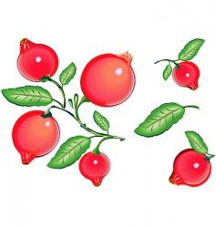 cranberries vector image vector image