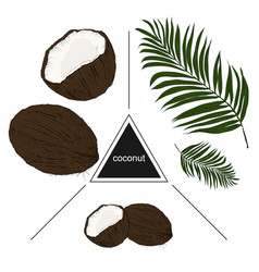 set of tropical fruits coconuts and leaves vector image vector image