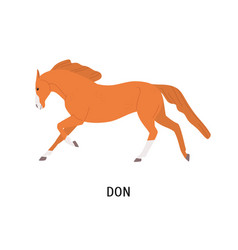 Don horse flat beautiful vector