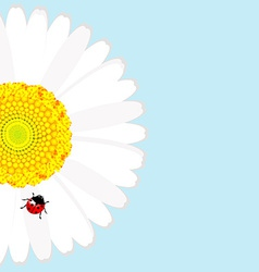 Ladybird on daisy flower over blue background vector image