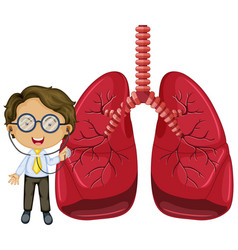 Lungs with a doctor cartoon character vector
