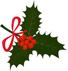 twig of holly with leaves and berries isolted on vector image