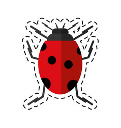 cartoon ladybug insect nature icon vector image vector image