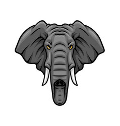 elephant head tusks and trunk mascot icon vector image