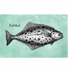 Ink sketch halibut vector