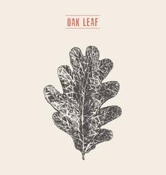 oak leaf hand drawn sketch vector image