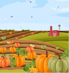pumpkins harvest autumn seasonal banner vector image