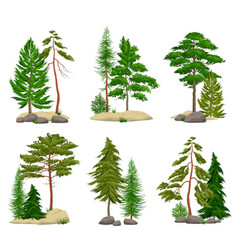 realistic pine forest elements set vector image