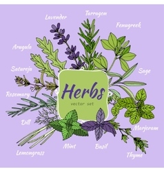 Set of herbs for food and cosmetic vector