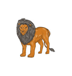 lion hunting surveying prey drawing vector image