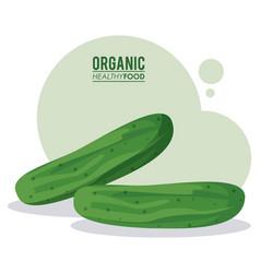 organic healthy food cucumber vegetable vector image