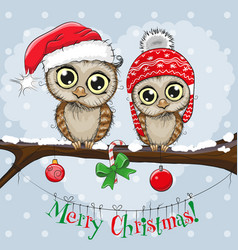 greeting christmas card two owls vector image vector image