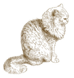 engraving of cat vector image