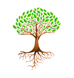 green leaf tree with branches and roots vector image