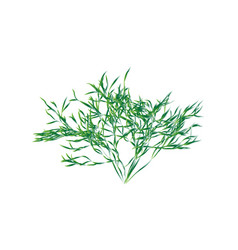 Green shrub isolated vector