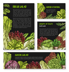 salads and leafy lettuce templates posters vector image