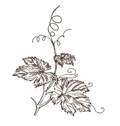 Grape leaves in the style of a sketch vector