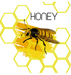 hand drawn natural honey template vector image