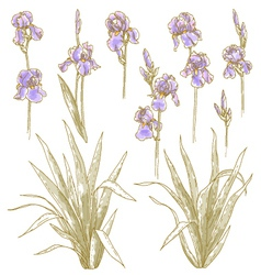 collection of iris flowers vector image