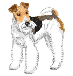 dog Wire Fox Terrier breed standing vector image