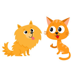 pomeranian spitz dog and red cat kitten vector image vector image