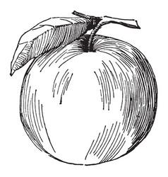 Apple vintage vector